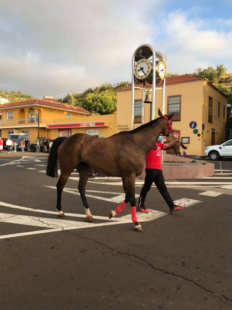 Pferderennen im Norden von La Palma